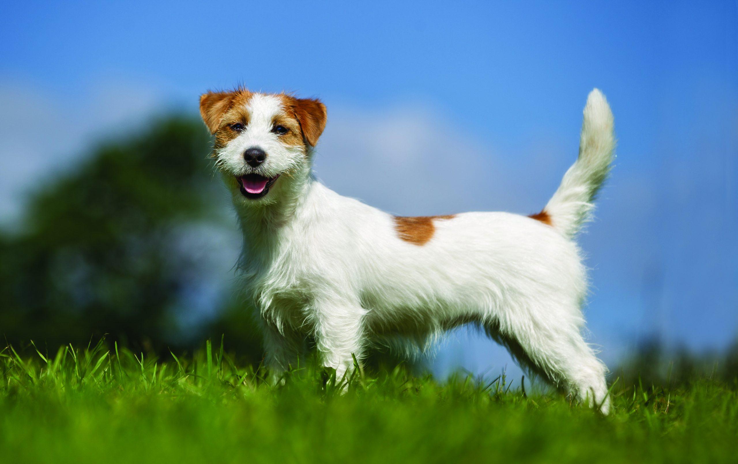 Boldog kutya